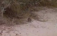 11 Sand Rats liberated