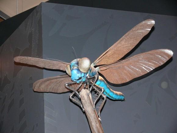 Modelo de Meganeura, uno de esos insectos gigantes carboníferos en el Museo de Hª Natural de Berlín (foto de Gunnar Ries Amphibol en Wikipedia)