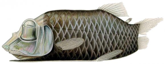 Opisthoproctus soleatus
