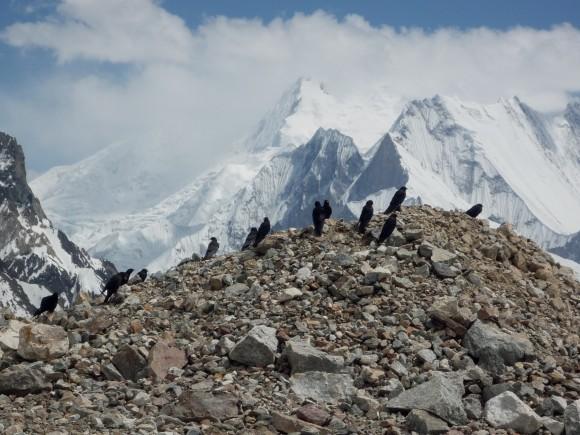 La chova piquigualda y los alpinistas del Broad Peak