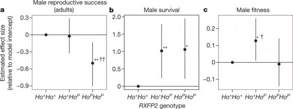 Variables demográficas que condicionan la adecuación según genotipos (imagen: Johnston et al, Nature)