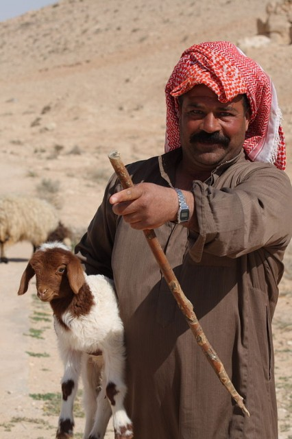 Pastor beduino