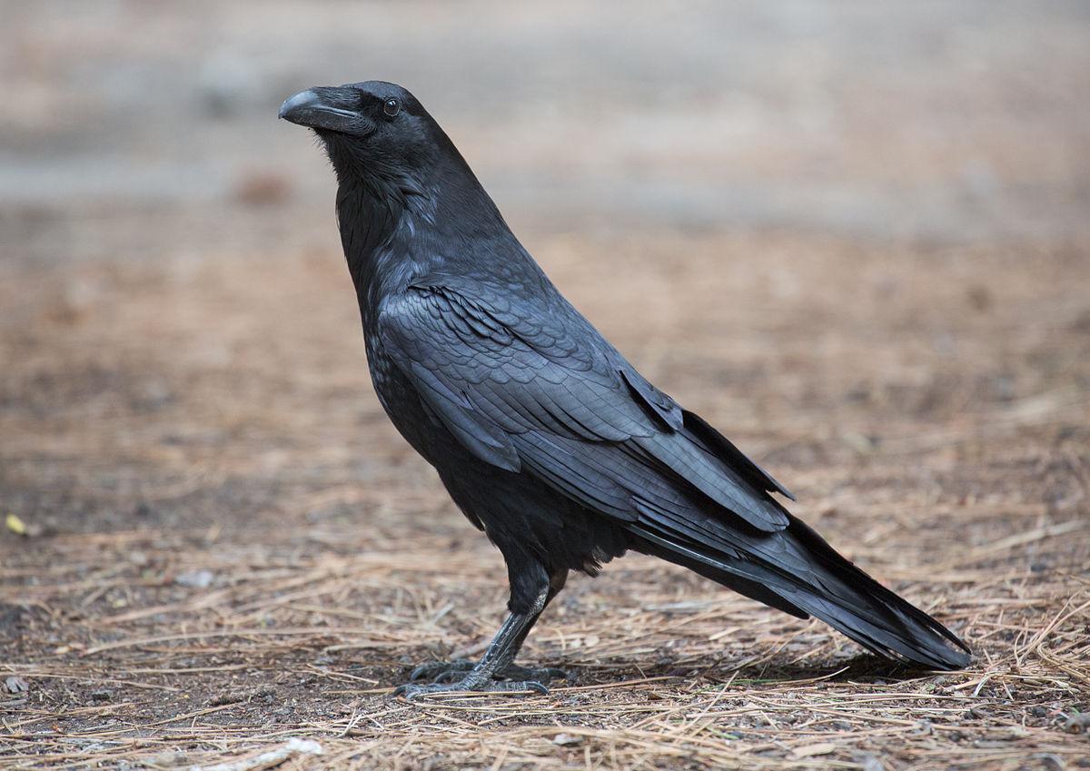 Las aves más listas se estresan menos | General | Zoo Logik