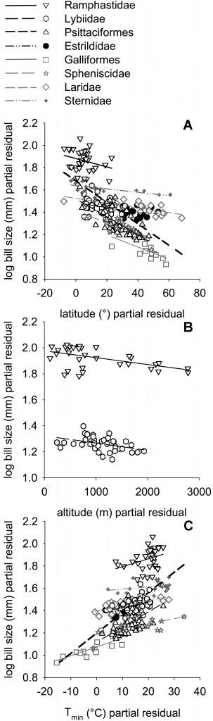 Relaciones entre la longitud del pico y la latitud (A), la altura (B) y la temperatura (C)