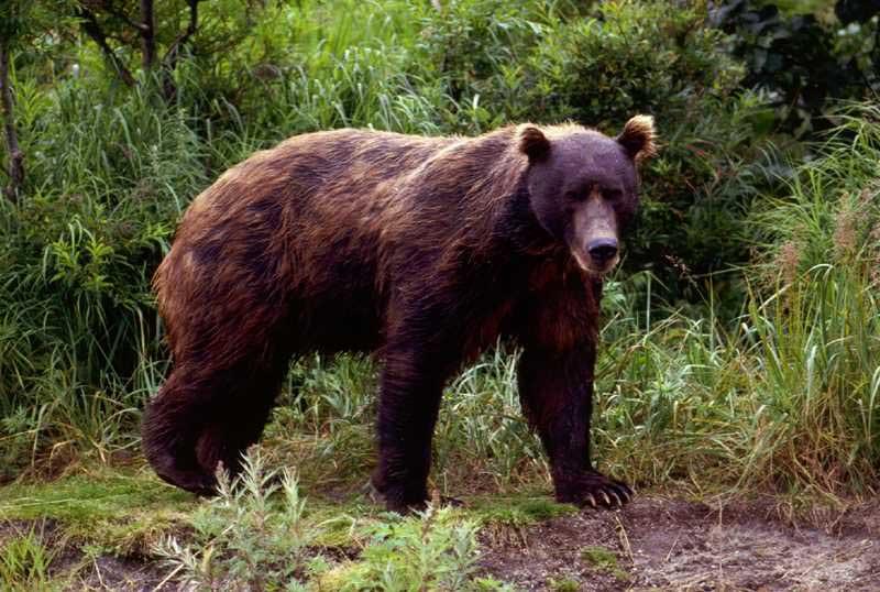 Por la Candelera sale el oso de la cueva | General | Zoo Logik