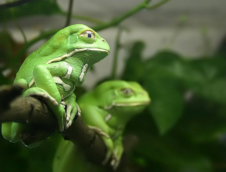 Ranas impermeables | General | Zoo Logik