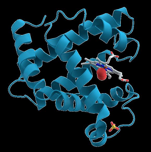 Representación de la molécula de mioglobina