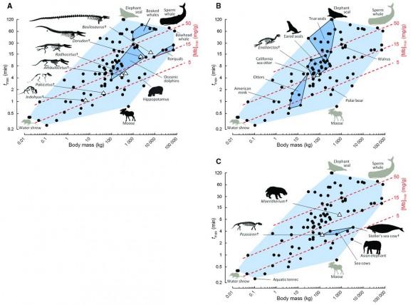 Datos para modelar la capacidad de buceo en ballenas, focas y vacas marinas ancestrales. Tiempos de buceo (tmax) y masas corporales de mamíferos actuales (círculos) y representantes fósiles de sus transiciones tierra-agua (triángulos). En A, B y C se destacan grupos escogidos: (A) Cetartodactyla; (B) Carnivora; (C) Afrotheria.