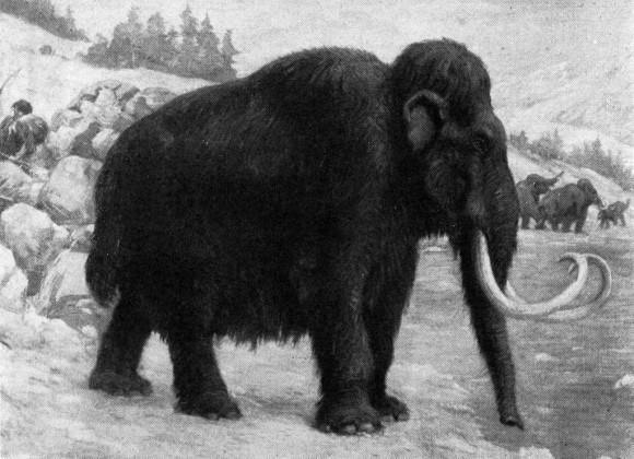 Reconstrucción de un mamut lanudo de Charles R Knight