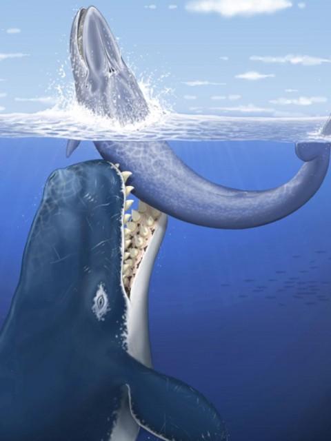 Recreación de una escena en la que nuestro Leviathan  daría caza a una ballena.