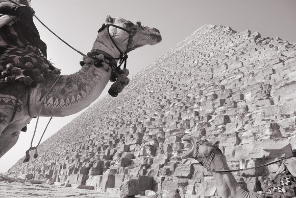 La nariz del camello