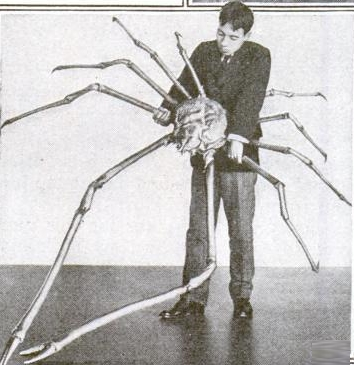 japanese_spider_crab