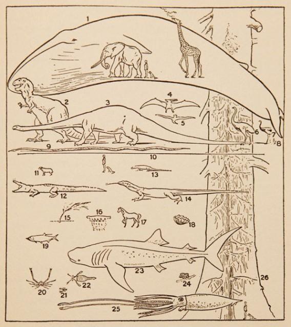 Los animales y las plantas más grandes, de H. G. Wells, J. S. Huxley & G. P. Wells (1931): The Science of Life. Cuando, lo largo del texto, se cite alguno de estos animales, se dará su número en esta figura entre paréntesis para que sirva de referencia.