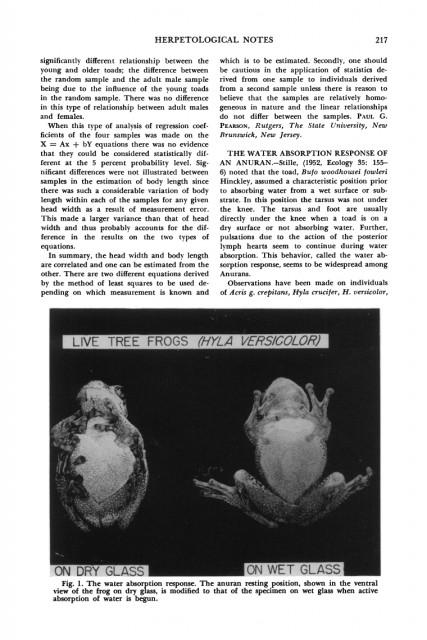 Sapos y ranas beben por la piel